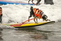 "Surf Dog Competition-CD-080115 (182) • <a style=""font-size:0.8em;"" href=""http://www.flickr.com/photos/25952605@N03/20244464756/"" target=""_blank"">View on Flickr</a>"