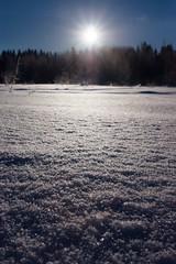 Мороз и солнце день чудесный! (РЕММАНИ) Tags: реммани поздравляем рождество праздник времяподарков луна поползень кормушка отдыхпослеработы морозисолнце поле снег мороз фотоаппарат frost field 27