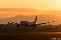 Itami Sky Park 2017.1.1 (12) JA810A / ANA's B787-8 (double-h) Tags: eos6d ef300mmf28lisiiusm rjoo itm osakaairport itamiairport 大阪空港 伊丹空港 airplane 飛行機 伊丹スカイパーク itamiskypark ja810a ana 全日空 b787 b7878 dreamliner