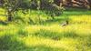 Dog runs on grassland@Wuling Farm, Taiwan.武陵農場午後美好陽光與黑狗~ (Evo-PlayLoud) Tags: canoneos550d canon550d canon 550d efs18135mmf3556 efs 18135mm 18135mmkit grass landscape scenery taichung taiwan green 台中 台灣 武陵農場 wulingfarm 風景 風景照 雪霸國家公園 雪霸 tree trees sunlight lightfantasy hdr grassland dog 狗 sunshine lightshadows