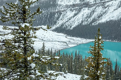 Peyto Meltwaters (Kirk Lougheed) Tags: alberta banff banffnationalpark canada canadian canadianrockies canadien icefieldsparkway mountpatterson mtpatterson peytolake autumn conifer fall forest lake landscape nationalpark outdoor snow tree water
