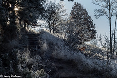 161230_006-192.jpg (Jacky Vastmans) Tags: limburg maasmechelen mechelseheide beriezen bevroren bos cold dennebomen dennen fairytale freezing frozen koud landscape landschap mysterieus pad panorama path pine sneeuw sneeuwlandschap snow snowylandscape sparren sprookje sprookjesachtig stairs stilleven trap vriezen winter winterlandschap wood