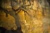 disappearance_viii (Jonny Bell) Tags: jonnybell icm multipleexposures environment environmental erosion climate change cliffs trees suffolk sea covehithe