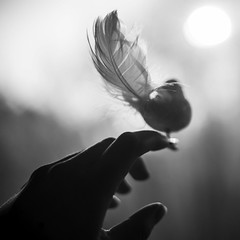 (Esther'90) Tags: little bird hand feathers feather blackandwhite backlight backlighting bokehbackground bokeh sunshine sunlight sun fingers morning morninglights