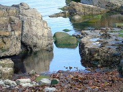 reflection. (amymcginn389) Tags: reflection rocks water seaweed sea pebbles brown grey green black glassy northern ireland northernireland ni portrush coleraine north coast northcoast atlanticsea atlantic ocean washed up washedup washup wash grime