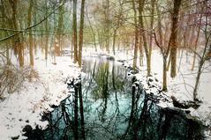 Winter's Chill (floralgal) Tags: ryenaturecenter ryenewyork westchestercountynewyork newyorklandscape winterinnewyork snowydayinryenewyork winterschill nature pondreflections treereflections stream riversstream wetlands woodlands