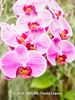 Duke Farms-7013021-2 (myobb (David Lopes)) Tags: dukefarms hillsborough nj newjersey nature olympus em1 omd