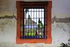 Real Alcazar (hans pohl) Tags: espagne andalousie séville alcazar fenêtres windows architecture façades