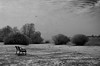 Winter Solitude (slivinska) Tags: winter solitude blackandwhite monochrome birds bench bw minimalist