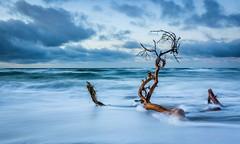 Strandgut (filius666) Tags: mecklenburgvorpommern ostsee baltic sea see fischlanddars strand blau treibholz wellen winter wetter wolken weststrand wind holz