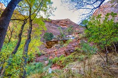 Illusion (Herculeus.) Tags: 2016 bouldersstonerocks canyon cliffs country day diciduoustrees erosion evergreens fall landscape landscapes oct outdoor outdoors outside rockwall trees ut zionnp reflection water illusion
