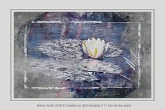 Water Lily --- again! (NancySmith133) Tags: waterlily lakeapopkanorthshorewildlifedrive centralfloridausa painterly photopainting paintingthephotograph