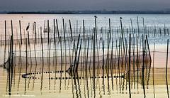 Fishing nets in l'Albufera (Ignacio Ferre) Tags: agua water spain españa valencia atardecer sunset fishing net red pesca albuferanaturalpark laguna lago lake albufera l´albufera paisaje nikon landscape