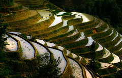 Rice Terrace (Redust) Tags: 5photosaday  travel5day