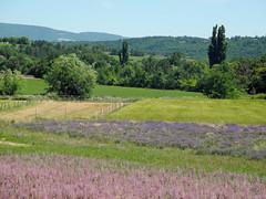 237 Farbenvielfalt in der Provence (Wuwus Bilder) Tags: natur champs felder arbres provence paysage landschaft bume farbenvielfalt