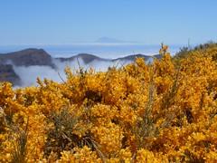 La Palma - beim Roque de los Muchachos (christine caboverde) Tags: la kanaren canarias palma wandern kanarische inseln wanderparadies