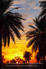 Sunrise Over Baghdad (Steven Green Photography) Tags: morning travel blue sky orange sun nature leaves silhouette clouds sunrise photography dawn outdoor framed iraq scenic palm palmtree baghdad fronds stevengreen