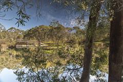 Pondering (Timothy M Roberts) Tags: nature pond bush nikon australia nsw eucalyptus centralcoast tamron scrub australianreptilepark somersby