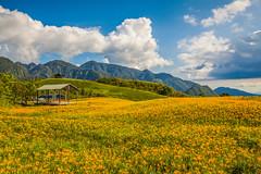_MG_9702 () Tags: morning sunset sky sun lake night clouds sunrise photography dawn farm taiwan bluesky farmland daylily  choi dslr      baiyun   noctilucent         invertedimage formosan   hemerocallisfulva     lilyflower             canon5d2