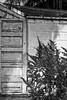 climbing the walls wednesday (jeneksmith) Tags: sailshade cinderblock stringlights bywater nola bigeasy crescentcity neworleans louisiana canon door doorway wall vine threshold entryway monochrome blackandwhite bw grey gray plant