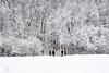 winter wonderland (marianna_a.) Tags: p3110508 winter wonderland montreal mariannaarmata trees people landscape canada