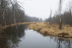 meandering (Barbara A. White) Tags: madawaskariver latefall misty muted canada