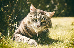 Sniff (M J Adamson) Tags: sweetpea cats pets nz newzealand outdoor outdoors