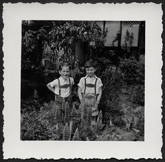 Archiv K641 Zwischen Lupinien und dem Schwertliliengewächs, 1950er (Hans-Michael Tappen) Tags: archivhansmichaeltappen blumengarten jungen junge lederhosen lederhose lupinien hosenträger braces haarklammer fotorahmen outdoor 1950s 1950er