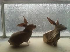 rabbit - nguyen hung cuong (javier vivanco origami) Tags: javier vivanco origami ica peru rabbit nguyen hung cuong