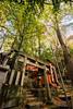 Shrine. (aludatan) Tags: shrine kyoto japan travel fushimiinaritaisha fushimiinari tree japanculture 日本 京都 伏见稻荷大社 旅行