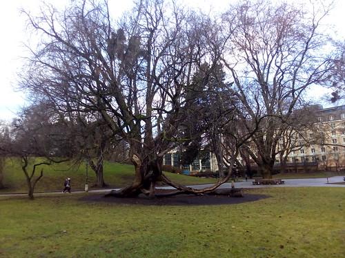 Jardins do Palácio Mirabell