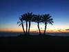 La Herradura Palmtrees (María Videla) Tags: palm tree palmtree sun sunset landscape horizon contrast spain sea beach coastline granada andalusia