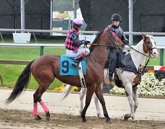 "2015-05-21 (23) r2 Julio Hernandez on #9 Deliver Me (JLeeFleenor) Tags: photos photography md marylandracing marylandhorseracing pimlico jockey جُوكِي ""赛马骑师"" jinete ""競馬騎手"" dżokej jocheu คนขี่ม้าแข่ง jóquei žokej kilparatsastaja rennreiter fantino ""경마 기수"" жокей jokey người horses thoroughbreds equine equestrian cheval cavalo cavallo cavall caballo pferd paard perd hevonen hest hestur cal kon konj beygir capall ceffyl cuddy yarraman faras alogo soos kuda uma pfeerd koin حصان кон 马 häst άλογο סוס घोड़ा 馬 koń лошадь rain maryland"