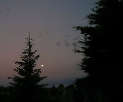 Christmas tree is a little overgrown (rjmiller1807) Tags: moon june pine dusk christmastree evergreen fir oxfordshire 2015