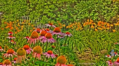 July Flowers (mdarcade--DeAnne) Tags: pink flowers nature floral fleur yellow collage photomanipulation photoshop butterfly lily coneflowers photoart paintedflowers photomatixessentials deannerosen