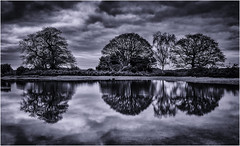 Dark days. (muddlemaker1967) Tags: hampshire landscape photography blackwhite reflections trees water nikon d700 nikkor afs 2870 f28