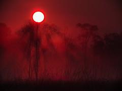 Brook Rot (Torsten schlüter) Tags: deutschland duvenstedterbrook 128mm 2016 hamburg nebel rot sonne sunrise gegenlicht