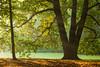 Triplet (S l a w e k) Tags: wroclaw lowersilesia poland autumn park scene beech tree misty hazy sunshine landscape scerene peaceful travel tourism europe