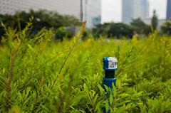 A Hose Among the Thorns (Blue Nozomi) Tags: bonifacio global city bgc taguig manila philippines garden sprinkler grass plant green blue