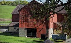 Amish Pastoral (TuthFaree) Tags: elements amish barn fence pastoral rural farm ohio holmescounty red buggy ducks wagon hff fencefriday