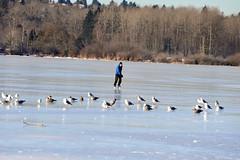 Burnaby -7C frozen lake skating (jeslu) Tags: burnaby 7c frozen lake skating