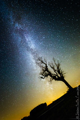 The diseased tree & the milky way (jeje62) Tags: astrophotography decrocherlesetoiles drone milkyway night nightphotography nightscape pasdecalais paysagenocturne samyang14mmf28 starscape voielactee étoiles wismes nordpasdecalaispicardie france fr