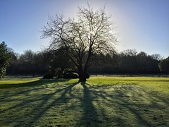 Winter Morning (Marc Sayce) Tags: tree winter morning shadows frost frosty 2017 lodge forest alice holt hampshire wrecclesham farnham surrey south downs national park