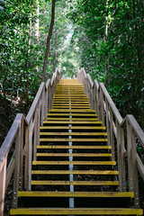 Yellow Stairs (bady_qb) Tags: 50mm sonyalpha macritchie sony a7ii singpore singapore stairs yellow forest woods nature