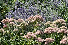 Mercer County Gardens (132) (Framemaker 2014) Tags: fernbrook farms chesterfields new jersey mercer county united states america