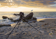 Heron, Sunset, and Time Lapse Photography (SteveFrazierPhotography.com) Tags: caspersenbeach venice sarasotacounty florida fl sunset evening beautiful sundown colorful color pink red yellow blue clouds seashells egret bird camera tripod timelapse photography gulfcoast sand rocks rocky rockformations shore shoreline people shelling hunting sharksteeth fishing stevefrazierphotography canoneos60d shellingbeach park gulfofmexico winter december 2016 landscape seascape waterscape