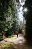 Wild forest (- m i l i e d e l -) Tags: forest winter miliedel cevennes france nikonfr nikonfrance walk wilderness wild sun novembre 2016 explore wander escape escapade man hike moutain pines