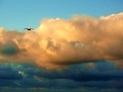le rêve (Rui 1959) Tags: nazaré seagul gaivota nuvens clouds bird