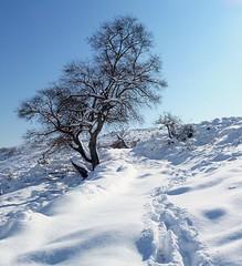 retour du Plan des Noves (b.four) Tags: neige snow neve quercia oak chêne plandesnoves vence alpesmaritimes ruby10 ruby15 ruby20