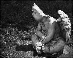 Angel_6622 (Typical Cheryl) Tags: blackandwhite baby broken monochrome statue angel wings nikon peaceful worn cherub weathered d7100